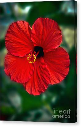 Hibiscus Canvas Print by Robert Bales