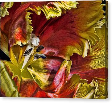 Hibiscus Spice Canvas Print by Joetta West