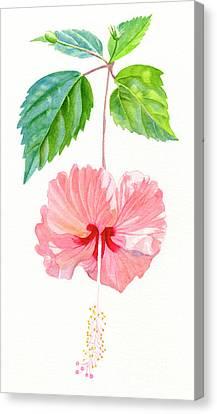 Hibiscus Canvas Print - Hibiscus Sprinkle Rain, Rosa Sinensis by Sharon Freeman