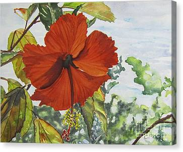 Hibiscus St Thomas Canvas Print