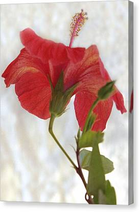 Hibiscus Canvas Print by Terence Davis