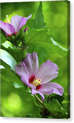 Hibiscus5586 Canvas Print by Carolyn Stagger Cokley