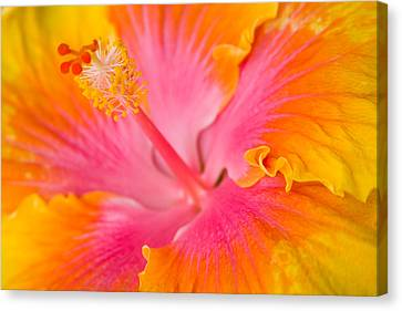 Hibuscus Splash Canvas Print by Eggers Photography