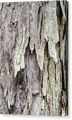 Canvas Print featuring the photograph Hickory Tree Bark Abstract by Christina Rollo