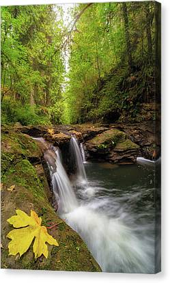 Hidden Falls At Rock Creek Canvas Print by David Gn