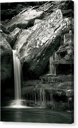 Hidden In The Forest Canvas Print by Iris Greenwell