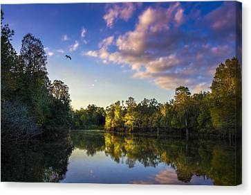 Ibis Canvas Print - Hidden Light by Marvin Spates
