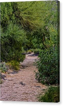 Hidden Path No24 Canvas Print by Mark Myhaver