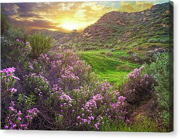 Hidden Treasure Canvas Print by Lynn Bauer