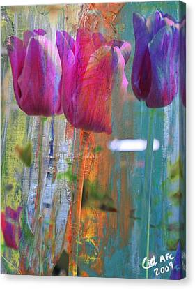 Hidden Tulips Canvas Print by  Cid