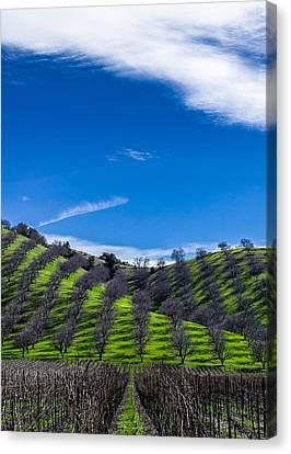 Hidden Valley Hills Canvas Print