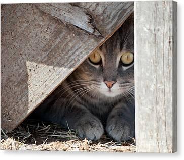 Hide A Kitty Canvas Print