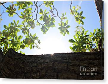 Canvas Print featuring the photograph Hide And Seek by Cendrine Marrouat