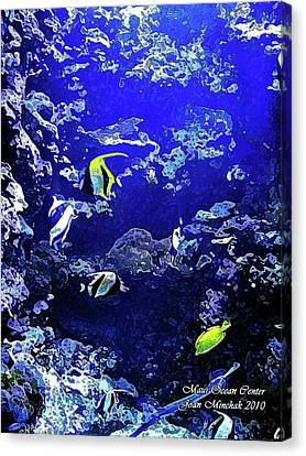 Hiding Fish Canvas Print