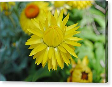 Canvas Print featuring the photograph Hiding From The Sun by Laura DAddona