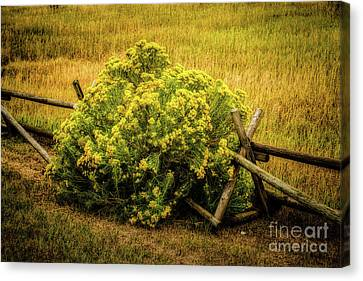 Cost Line Canvas Print - Hiding Place by Jon Burch Photography