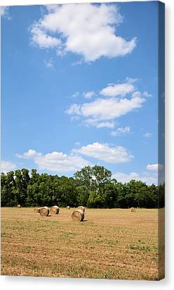 High As The Sky Canvas Print by Jan Amiss Photography