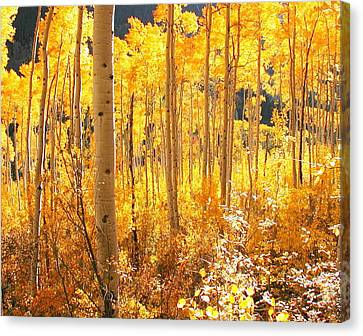 High Country Gold Canvas Print by The Forests Edge Photography - Diane Sandoval