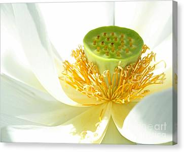 High Key Lotus Canvas Print by Sabrina L Ryan