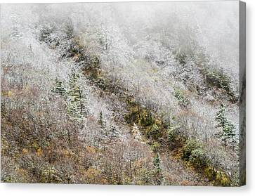 Frailty Canvas Print - High Mountain Forest, Covered By Snowy Hoar Frost, Huanglong by Sergey Orlov