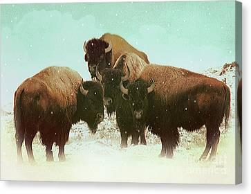 High Plains Bison Canvas Print