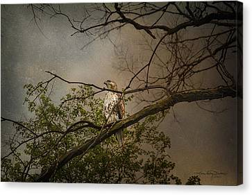Higher Perspective Canvas Print by Karen Casey-Smith