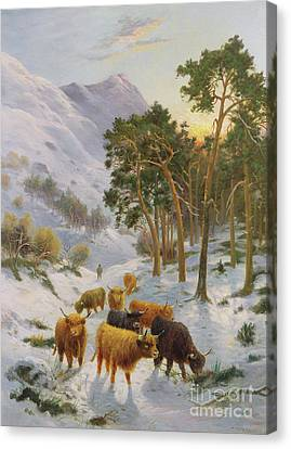 Snow Scene Canvas Print - Highland Cattle In A Winter Landscape by Charles Watson
