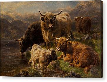 Highland Cattle Canvas Print by William Watson