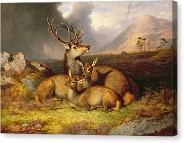 Highland Felicity Canvas Print by James Gills