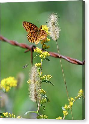 Highland Meadow Things Canvas Print by Randy Bodkins