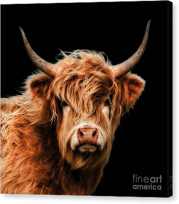 Highland Moo Canvas Print by Linsey Williams