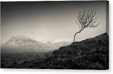 Highland Tree Canvas Print