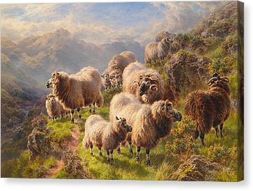 Highland Wanderers Canvas Print