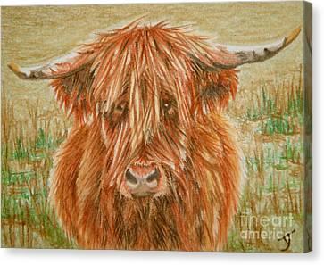 Highlander Aceo Canvas Print by Yvonne Johnstone
