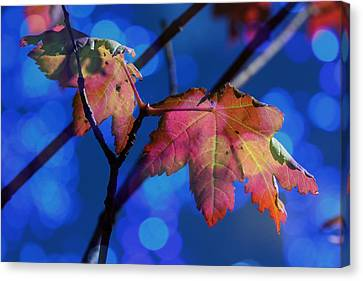 Highlights Of Summer Canvas Print by Barbara  White