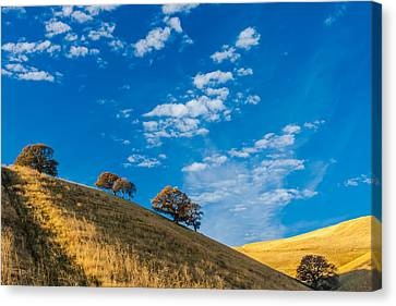 Hiking East Bay Hills Canvas Print by Marc Crumpler