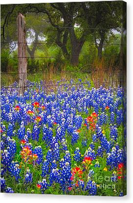 Hill Country Forest Canvas Print by Inge Johnsson