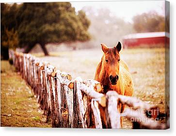 Hill Country Horse Canvas Print by Katya Horner
