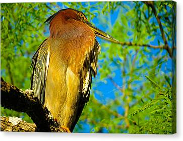 Hill Country Perch Canvas Print