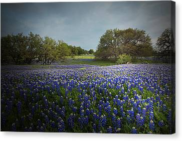 Hill Country Ranch Canvas Print