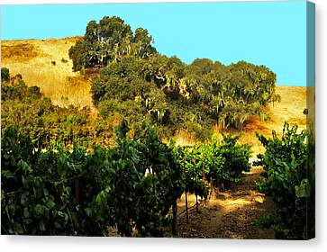 hill side vineyard 'n Oaks Canvas Print by Gary Brandes