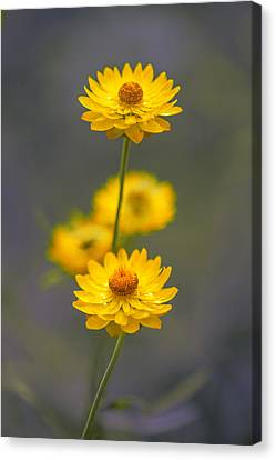 Hillflowers Canvas Print
