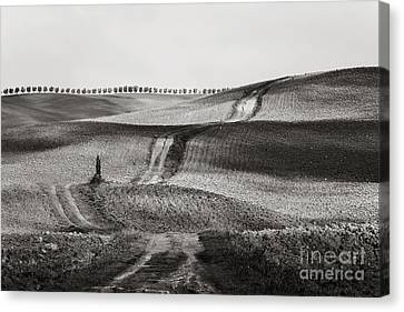 Alberi Canvas Print - Hills From Val D'orcia, Tuscany by Luigi Morbidelli