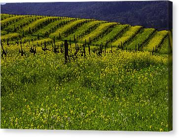 Hills Of Mustard Grass Canvas Print