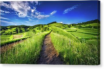 Hills Of Summer Canvas Print by Claudio Testa
