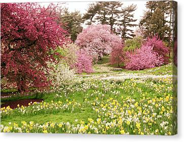 Canvas Print featuring the photograph Hillside Bloom by Jessica Jenney
