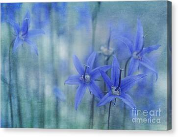 Hillside Blues Canvas Print by Priska Wettstein