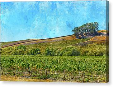 Wine Canvas Print - Hillside In Napa Valley California by Brandon Bourdages
