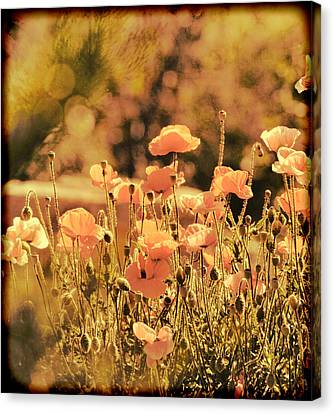 Canvas Print featuring the painting Hillside Poppies And Sunset by Douglas MooreZart
