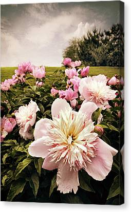 Hilltop Peonies Canvas Print by Jessica Jenney